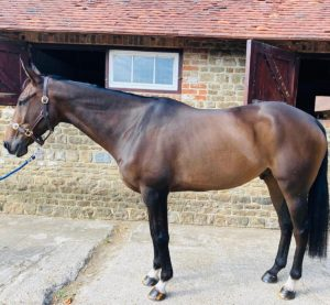 McNab's horse Hugo, after Pure Meadow Mash